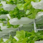 Vertical Farming Market - Urban Farming