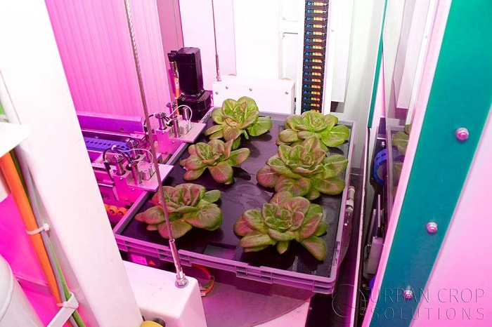Industrial processing of plants with a fully automated farming system from Urban Crop Solutions