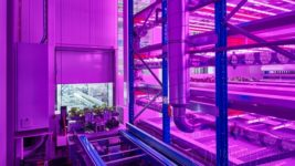 Automated farming system from Urban Crop Solutions increases the area yield
