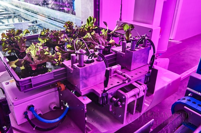Urban Crop Solutions from AgTech with automated farming system
