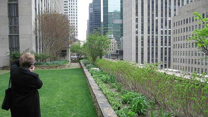 Green Roofs in New York City Mandatory Due to Climate Mobilization Act